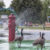 2016 07 29 Geese with Water Hydrant Splash 4474